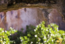 Cliff House Spider Web